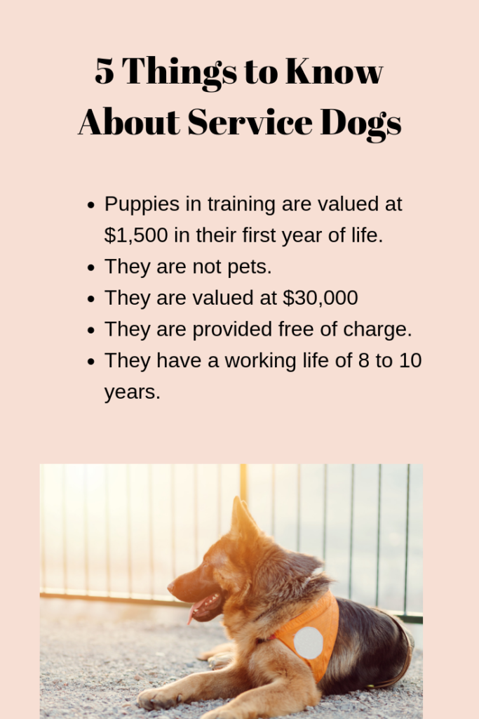 Tips about Service Dogs